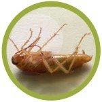 Уничтожение тараканов, клопов, муравьев, моли, блох, ос
