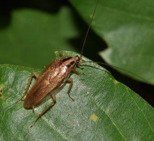 Уничтожение насекомых без запаха